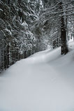 Snow-covered spruces Royalty Free Stock Photography