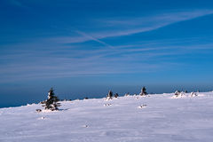 The snow-covered spruces on a mountain slope in the Giant Mountains Stock Image