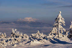 Snow covered spruces in the mountains in winter Beskidy Stock Photography