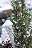 Snow covered stained white window box lantern. And thuja plant Stock Photography