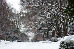 Snow covered street and treeline Royalty Free Stock Images