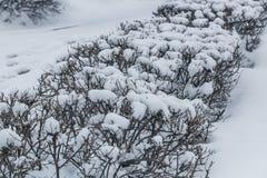 snow-covered struiken in de stad met sneeuw wordt bedekt die royalty-vrije stock fotografie