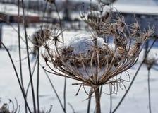 Winter garden. Fresh snow coating forgotten flowers of summer royalty free stock image