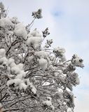 Snow-covered tak. Stock Foto