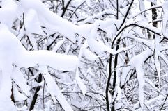 Snow-covered tak in het de winterbos Stock Fotografie