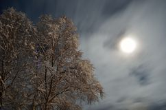 Snow covered tall birch tree with full moon and star sky background Stock Photos