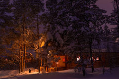 Snow-Covered Tall Pines on the Background of the Lighted Cottage Royalty Free Stock Photography