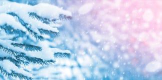 Snow-covered Tannenzweige stockbild