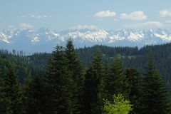 Snow  Covered Tatra Mountains over a Wood Royalty Free Stock Image