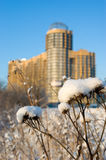 Snow-covered thistle. With under construction house on background Royalty Free Stock Photography