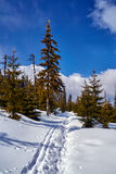 Snow-covered tourist trail in the Giant Mountains Stock Photos
