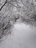 Snow covered trail. A hiking trial covered in snow with the trees making a tunnel Stock Photography