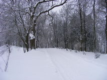 Snow-covered trail of the old snow-covered park Stock Images