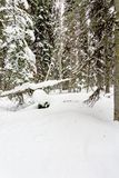 Snow Covered trail for snow shoing. Snow covered alpine mountain forest royalty free stock photos