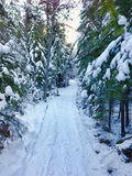 Snow Covered Trail Through the Woods Royalty Free Stock Images