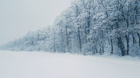 Snow Covered Tree Stock Photography