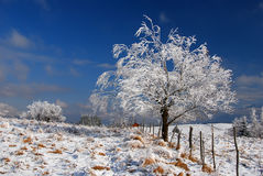 Snow covered tree Stock Images