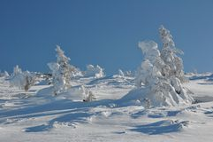Snow-covered tree Stock Photography