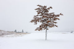 Snow covered tree. Stock Image