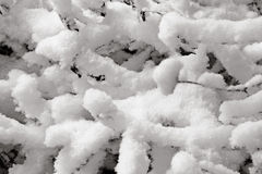 Snow covered tree. Detailed closeup of snow covered tree branches Stock Photography