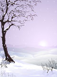 Snow-covered tree. (other landscapes are in my gallery Royalty Free Stock Photography