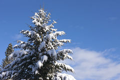 Snow covered tree. Stock Photos