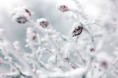 Snow-covered tree Stock Images