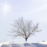 Snow covered tree Royalty Free Stock Photography