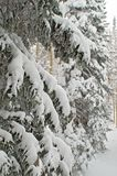 Snow covered tree Royalty Free Stock Images