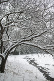 Snow covered tree arching over a small stream. Royalty Free Stock Images
