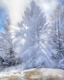 Snow Covered Tree Backlit with Sunbeams Stock Photos