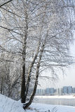 Snow-covered tree. Snow-covered tree on the banks of the river Stock Photography