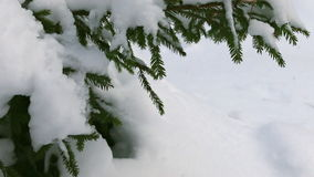 Snow-covered tree branch. stock footage