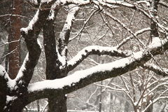 Snow covered tree branch. A heavy fall of snow covered the ground Stock Photos