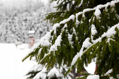 Snow-covered tree branch Royalty Free Stock Images