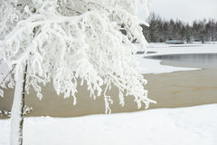 Snow covered tree Stock Photos