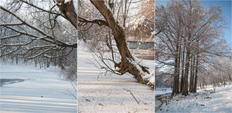 Snow-covered tree branches. Beautiful winter landscape with snow covered trees. Winter in forest, sun shining through branches Royalty Free Stock Images