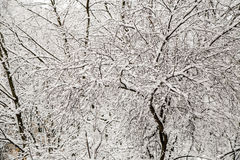 Snow covered tree branches. In forest Stock Photos