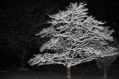 Snow Covered Tree Branches Illuminated Against Black of Night Royalty Free Stock Images