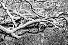 Snow-covered tree branches reflected in a lake Stock Image