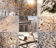 Snow-covered tree branches. Robin in the snow in winter. Winter landscapes with snow. Beautiful winter landscape with snow Royalty Free Stock Photos