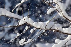 Snow-covered tree branches in winter Stock Photography