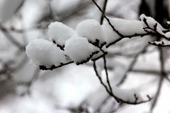 Snow-covered tree branches in winter Stock Photos