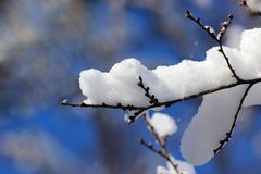 Snow-covered tree branches in winter Stock Images