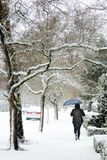 Lady holds a blue umbrella while walking in a winter snow storm on a city sidewalk. With snow covered tree branches a woman walks on a sidewalk covering her head stock image