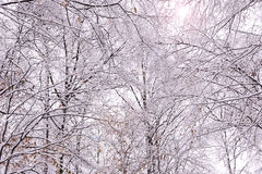 Snow covered tree canopy is a winter wonderland with lens flare Stock Photos