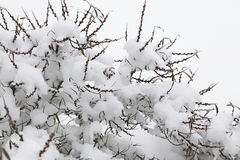 Snow covered tree Stock Image