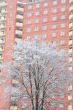 Snow-covered tree in front of house Royalty Free Stock Photo