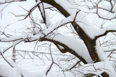 Snow covered tree. A heavy fall of snow covered the tree Royalty Free Stock Photo