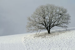 Snow covered tree on hillside. Scenic view of snow covered tree on hillside in countryside Stock Photo
